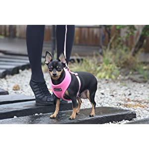 Puppia Soft Dog Harness, Beige, Small