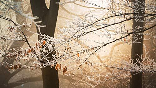 Framed Sunrays - Nature Tree Sunray (Art Print)