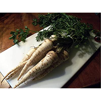 Root Parsley 'Alba' (Petroselinum Crispum) Vegetable Plant Seeds, Medium Late Heirloom : Garden & Outdoor