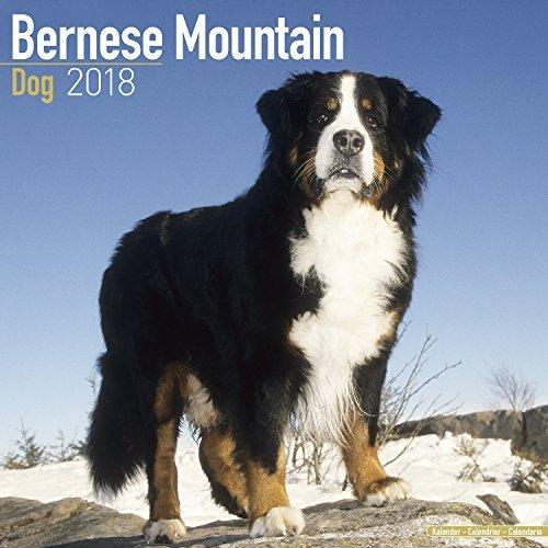 Bernese Mountain Dog Calendar 2018 - Dog Breed Calendar - Premium Wall Calendar 2017-2018