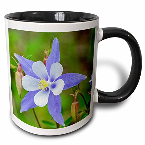 (3dRose 189735_4 Use Colorado Rio Grande National Forest Blue Columbine Two Tone Mug 11oz Multicolored)