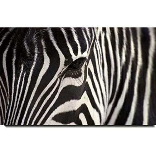 - Art Paintings, 3D HD Painted Modern Abstract - African Animals Zebra,16 * 24inch(40 * 60cm)