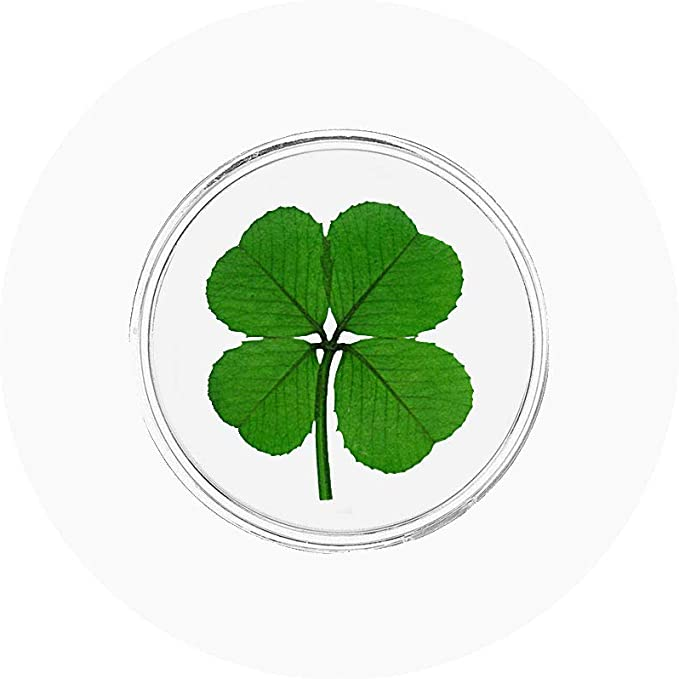 25 Genuine Four Leaf Clovers - Memorial 25 Real 4 Leaf Clovers Christmas Luck