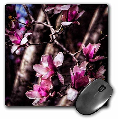 Magnolia Budding - 3dRose Boehm Photography Flower - Budding Magnolia Flowers - MousePad (mp_127509_1)