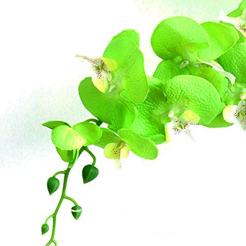 Hot Sale!Unique Green Orchid Bonsai Flowers Formaldehyde Air Purification Seeds Phalaenopsis Orchids,100 PCS,#H3GQWM