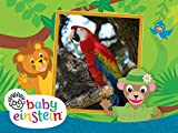 Baby Einstein Wild Animal Safari