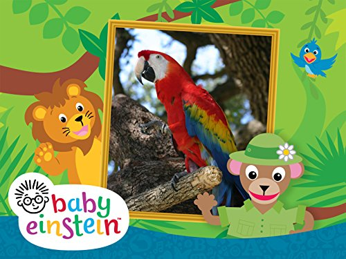 baby einstein world animals - 2
