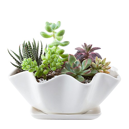 Garden Planters Containers Urns - Mkono 6 Inches Ceramic Succulents Planter Bowl with Saucer Decorative Plant Pot with Drainage