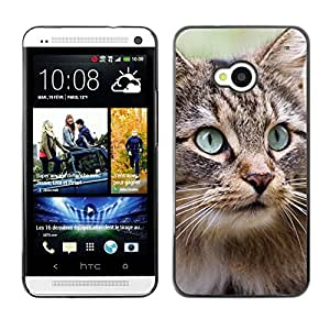 Vortex Accessory Carcasa Protectora Para HTC ONE ( M7 ) - Maine Coon Norwegian Forest Cat -