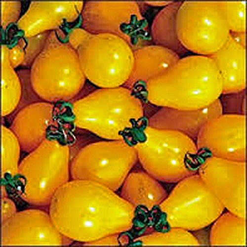 TOMATO,YELLOW PEAR TOMATO SEED, HEIRLOOM, ORGANIC, NON-GMO, 25+ SEEDS, TASTY, GREAT FOR ()