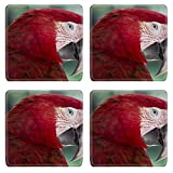 Luxlady Square Coasters Non-Slip Natural Rubber Desk Coasters ID: 40629427 Red Macaw Parrot in Bali Bird Park Indonesia