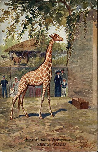 Giraffe in Zoo Enclosure Other Animals Original Vintage Postcard from CardCow Vintage Postcards