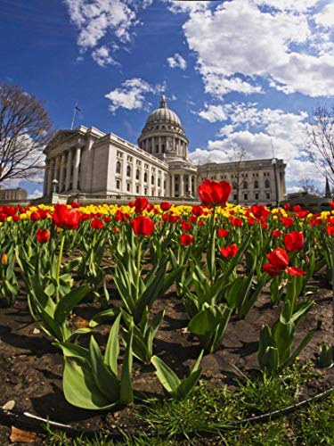 (Tulips and Capitol 3, Madison Wisconsin Color Photograph)