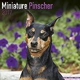 Miniature Pinscher Calendar 2017 - Dog Breed Calendars - 2016 - 2017 wall calendars - 16 Month by Avonside