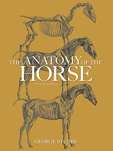 The Anatomy Of The Horse Dover Anatomy For Artists Kindle