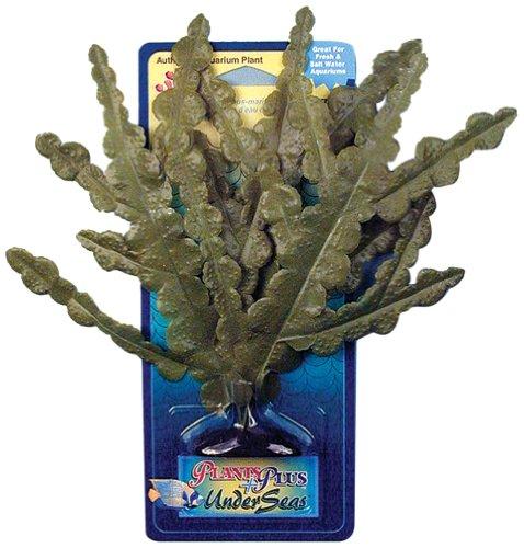 Pennplax Halideda Plastic Plant Aquarium Decor, (Medium Aquarium Plant)
