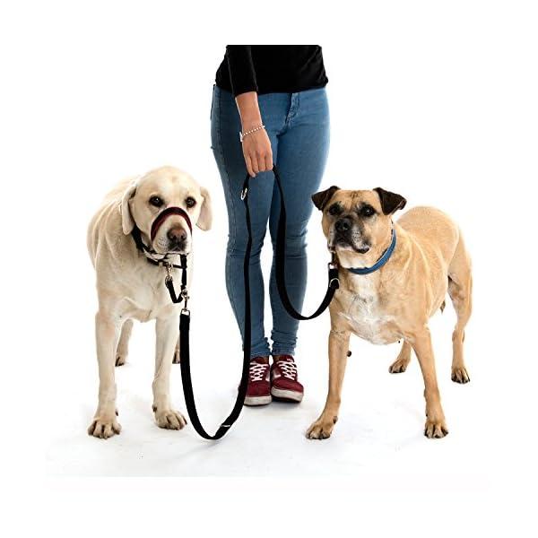 Company of Animals HALTI Training Lead 7