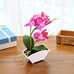 Lingstar-Simulate-Butterfly-Orchid-Potting-Flower-Phalaenopsis-Silk-Flowerpot-Potted-Artificial-Plant-Fake-Orchids-Flower-with-White-Vase-for-Wedding-Home-Decor-White