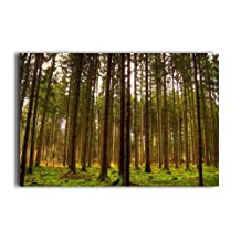 Home Wall Decor Poster Green Forest Pine Tree 20 X 30 Inch Wall Sticker