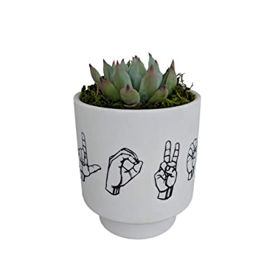 L.O.V.E. Spelled - Sign Language Planter with Live Plant - ASL - Live Trends : Garden & Outdoor