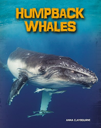 Humpback Whales (Living in the Wild: Sea Mammals)