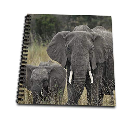 (3dRose db_9896_2 African Elephant, Loxodonta Africana, Maasai Mara National Park Kenya Africa 2 Memory Book, 12 by 12