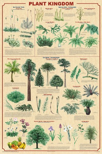 Plant Kingdom Educational Scientific Art Print Poster, 24X3