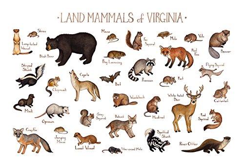 Virginia Land Mammals Field Guide Art Print