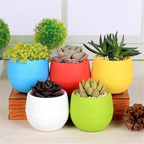 NERLMIAY 5 PCS Colorful Small Round Plastic Plant Flower Pots for Indoor and Outdoor Decoration(Red,Blue,Yellow,Green,White) (Plastic Pots Small compare prices)