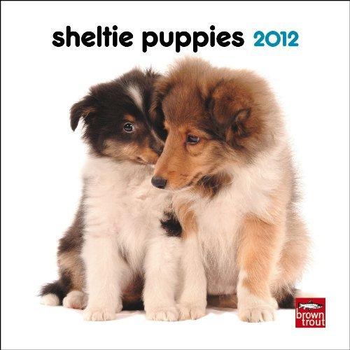 Sheepdog 2011 Calendar - Shetland Sheepdog Puppies 2012 Mini 7X7 Wall Calendar by BrownTrout Publishers Inc (2011-07-15)