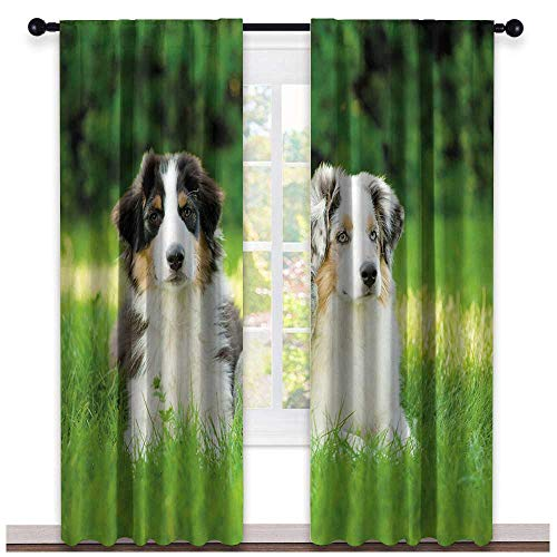 (hengshu Dog, Sound Curtains Noise Reducing, Cute Pets Puppy Family in The Garden Australian Shepherds and A Cat Scenery, Curtains for Bathroom, W108 x L108 Inch Cream Grey Fern Green)