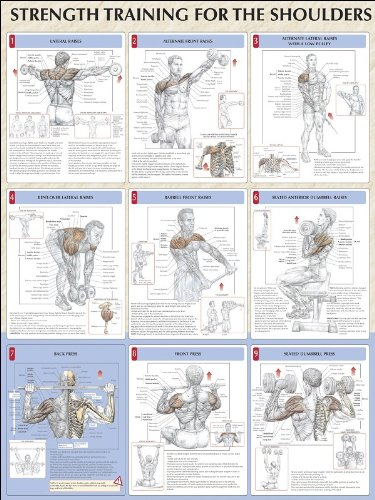 Strength Training for Shoulders Poster (Strength Training Anatomy ...