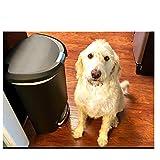 Dog-Proof Trash Can 50 Liter Kitchen Foot Step Tall Lock Lid Garage No Odor & eBook