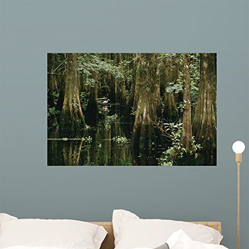 Wallmonkeys An Egret Stalks Fish in a Cypress Tree Swamp Peel and Stick Wall Decals WM16545 (36 in W x 24 in H)