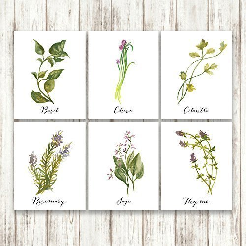 watercolor-herbs-kitchen-wall-art-print-set-of-6-six-unframed-prints-basil-chive-cilantro-rosemary-s