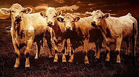 ANIMAL PHOTO PAINTING HERD CATTLE SEPIA LARGE WALL ART PRINT POSTER LF2398 - Sepia Photo Print