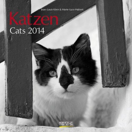 Katzen - Cats 2014
