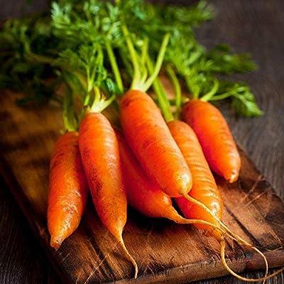 Red Cored Chantenay Carrot Seeds, 1000+ Premium Heirloom Seeds, Gardeners Choice!, (Isla's Garden Seeds), 85-90% Germination Rates, Non GMO Organic, Highest Quality.