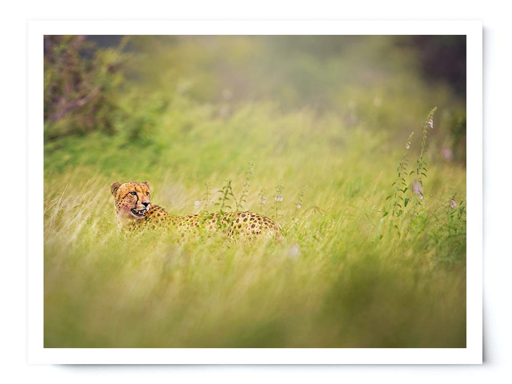 Cheetah in Flowers - Wildlife Photograph Animal Picture Home Decor Wall Nature Print - Variety of Size Available