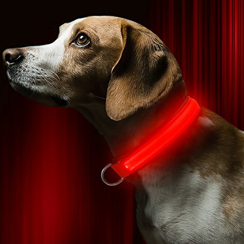 Bseen Led Dog Collar Usb Rechargeable Light Up Safety Pet Collar With 2 Glowing Modes Adjustable Soft Nylon Webbing Great For Small Medium Large Dogs  Small  Red