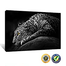 Creative Art- Gallery Wrap Canvas Prints - Black and White Tropical Cheetah Animal Wildlife Wall Picture Canvas Art Print,Ready to Hang 24''x36''