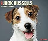 2018 Just Jack Russells Daily Desktop Box Calendar Dogs {jg} Great Holiday Gift Ideas - for mom, dad, sister, brother, grandparents, gay, lgbtq, grandchildren, grandma.