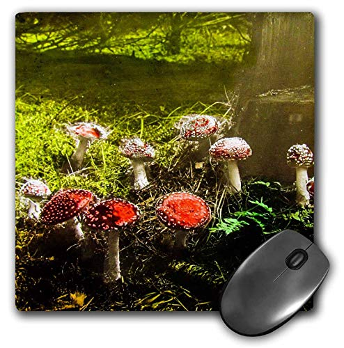 (3dRose Scenes from The Past Magic Lantern - Vintage Fantastic Funky Fungus Mushrooms in The Forest 1890s - Mousepad (mp_246047_1))