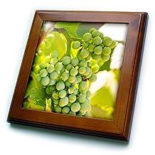Danita Delimont - Grapes - Grape vines at Mission Hill Family Estate, Canada. - 8x8 Framed Tile (ft_205913_1)