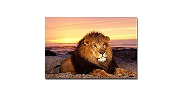 Sunset Lion Animal Nature Art Silk Poster 12x18 24x36 inch Room Wall Decor