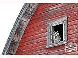 Owl in Barn Window – Wildlife Photography, Nature Photography, Wildlife, Nature, Owl, Home Décor, Wall Art