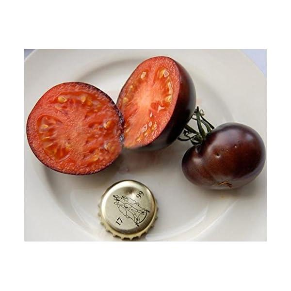 Ncient 20 Semi Sementi di Cherry Pomodori Neri per Orto Semi Vegetali Frutta Profumati Fiori Rari Piante Giardino… 3 spesavip