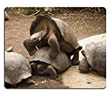 Liili Mouse Pad Natural Rubber Mousepad IMAGE ID: 6469912 A male and female Galapagos tortoise geochelone elephantopus in the mating position This endangered species of reptile is slowly staging a com