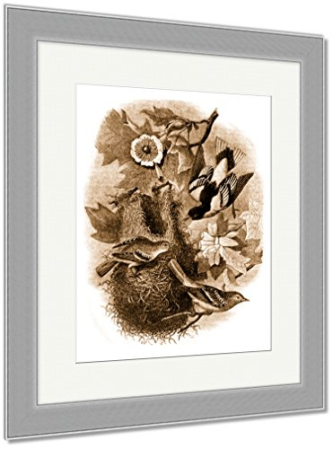 Ashley Framed Prints Baltimore Oriole Nest On A Tulip Tree Liriodendron Tulipifera Wild Vintage, Wall Art Home Decoration, Sepia, 30x26 (frame size), Silver Frame, AG5446084 (Orioles Bird Baltimore Silver)