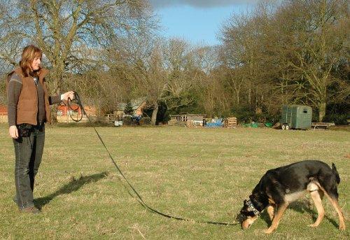 The Company of Animals CLIX Recall Training Line 10m 3